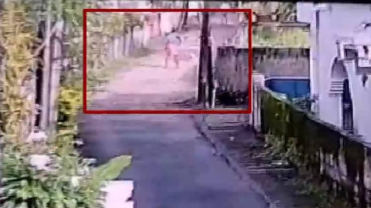 Incident beating to death street dogs as per instruction of Health Inspector