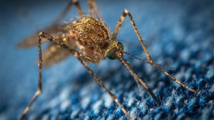 central team to discuss about zika virus