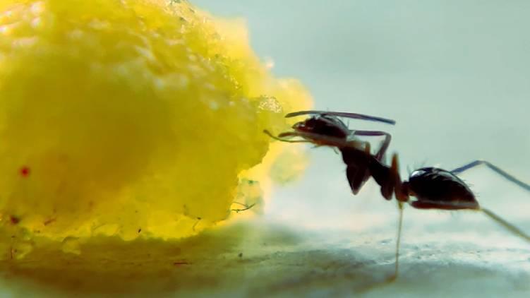the ants short film