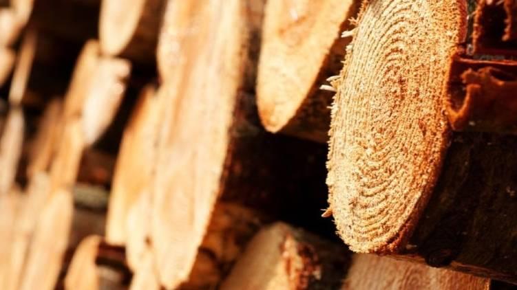 udumbanchola wood robbery case froze