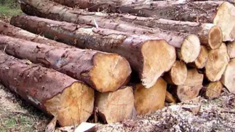 kerala wood robbery explanation