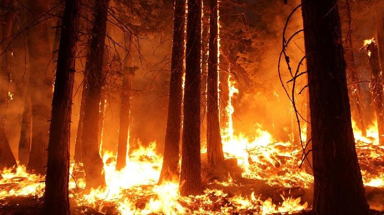 Wildfire spread in Algeria