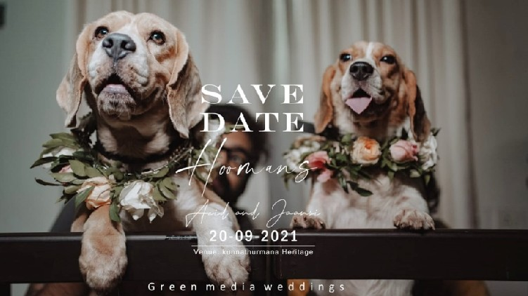 dogs get married