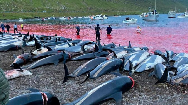 1500 dolphins were killed