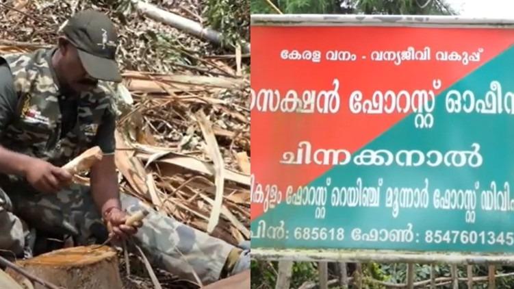 chinnakkanal tree felling