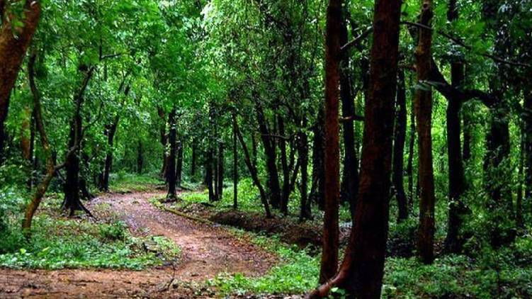 malampuzha forest officers trapped